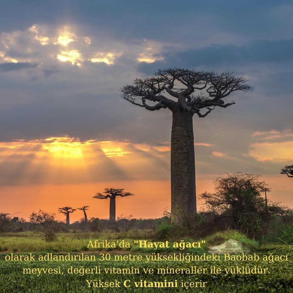 organik-baobab-tozu-3-naturiga