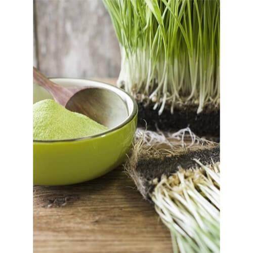 organik-bugday-cimi-tozu-4-naturiga